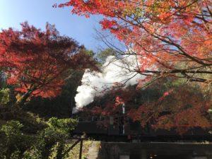 蒸気機関車がゆく紅葉の明治村。