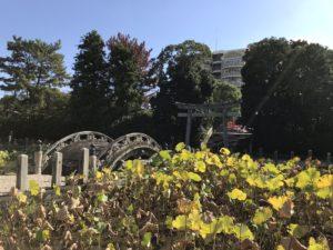 伊賀八幡宮の蓮池。